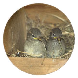 Nested Chicks Plate