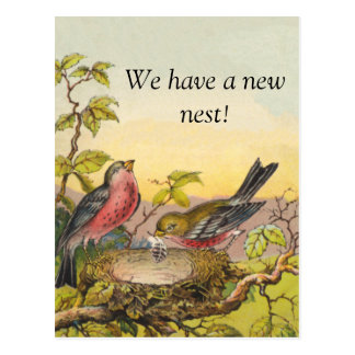 Nesting Birds New Address Postcard