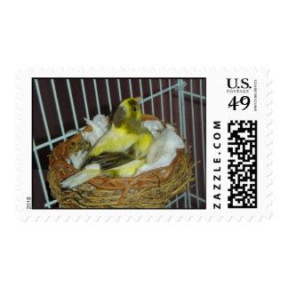 Nesting canary postage stamp