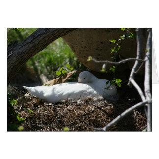 Nesting Coscoroba Swan Greeting Card