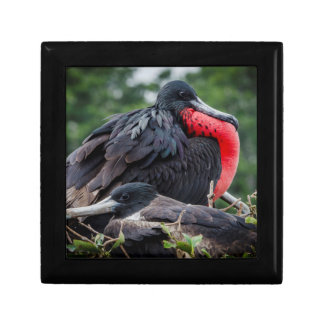 Nesting Frigate Bird pair Gift Box