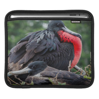 Nesting Frigate Bird pair Sleeve For iPads