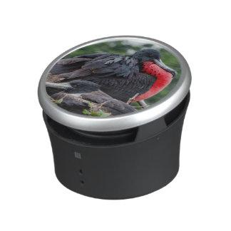 Nesting Frigate Bird pair Speaker
