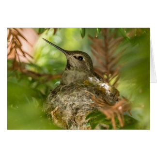 Nesting Hummingbird Note Card