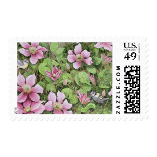 Nesting in Clematis Postage