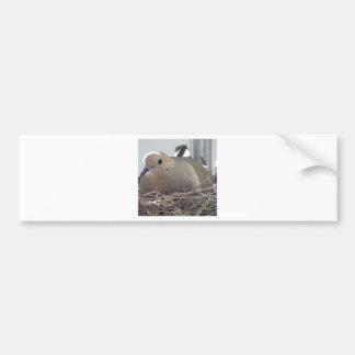 Nesting Mourning Dove Bumper Sticker