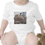 Nesting Mourning Dove Shirt