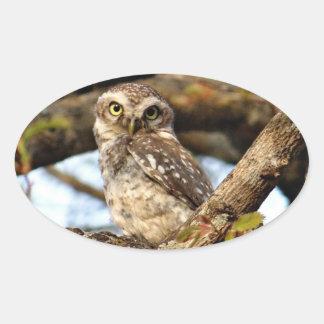 Nesting Owl Oval Sticker