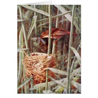 Nesting Reed Warbler Illustration Greeting Card
