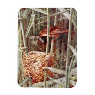 Nesting Reed Warbler Illustration Vinyl Magnets