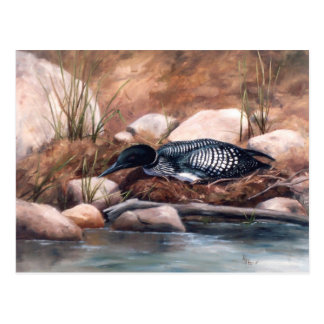 Nesting Time Loon Postcard