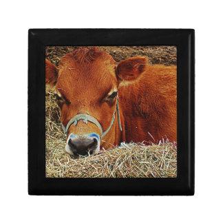 Nestled Cow Gift Box