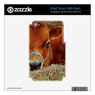 Nestled Cow iPod Touch 4G Skin