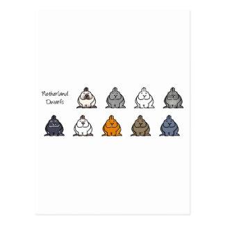 Netherland Dwarf Colours Post Card