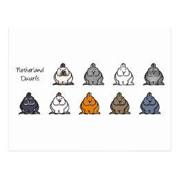 Netherland Dwarf Colours Postcard