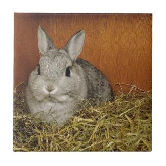 Netherland Dwarf Rabbit Ceramic Tile