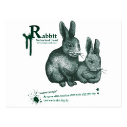 Netherland Dwarf: Rabbit - ink Postcard