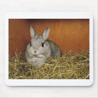 Netherland Dwarf Rabbit Mouse Pad