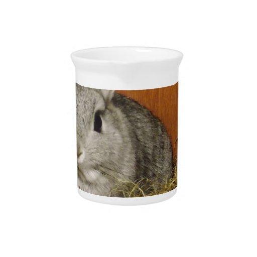 Netherland Dwarf Rabbit Drink Pitchers