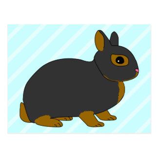 Netherland Dwarf Rabbit Post Card