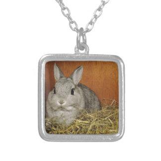 Netherland Dwarf Rabbit Square Pendant Necklace