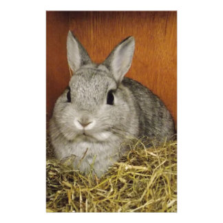 Netherland Dwarf Rabbit Stationery Paper