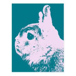 Netherland dwarf rabbit teal postcard