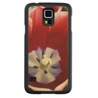 Netherlands (aka Holland), Lisse. Keukenhof 3 Carved Maple Galaxy S5 Case