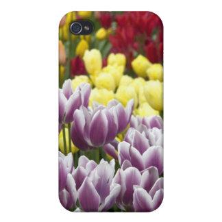 Netherlands aka Holland), Lisse. Keukenhof 3 iPhone 4/4S Cover
