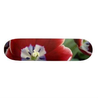 Netherlands (aka Holland), Lisse. Keukenhof 3 Skateboard