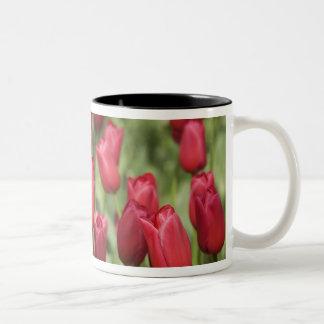 Netherlands (aka Holland), Lisse. Keukenhof 4 Two-Tone Coffee Mug