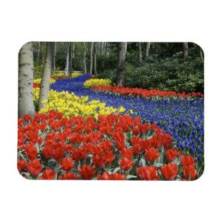Netherlands, Holland, Lisse, Keukenhof Gardens Rectangular Magnet