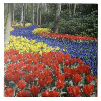 Netherlands, Holland, Lisse, Keukenhof Gardens Tile