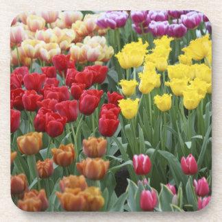 Netherlands, Keukenhoff Gardens, tulips. Beverage Coaster