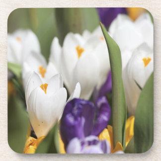 Netherlands, Keukenhoff Gardens, Tulips. Drink Coaster