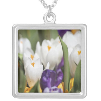 Netherlands, Keukenhoff Gardens, Tulips. Square Pendant Necklace