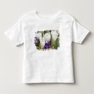 Netherlands, Keukenhoff Gardens, Tulips. T-shirt