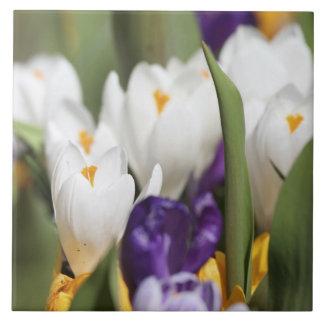 Netherlands, Keukenhoff Gardens, Tulips. Tile