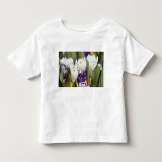 Netherlands, Keukenhoff Gardens, Tulips. Toddler T-shirt