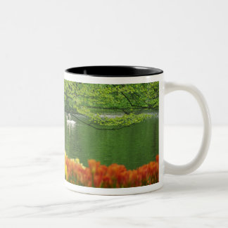 Netherlands, Lisse. White swans on pond amid Two-Tone Coffee Mug