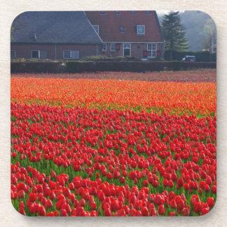 Netherlands: Tulip Field in Holland Drink Coaster