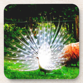 netherlands white peacocks and beauty beverage coaster