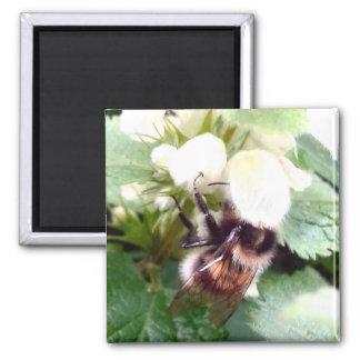Nettle Bee Magnet