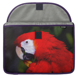 Network Guacamaya Veracruz Mexico Sleeve For MacBooks