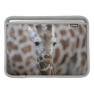 Netzgiraffe, Giraffa camelopardalis reticulata Sleeves For MacBook Air
