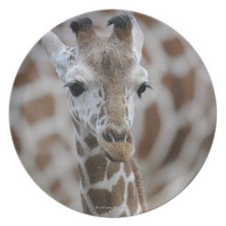 Netzgiraffe, Giraffa camelopardalis reticulata, Melamine Plate