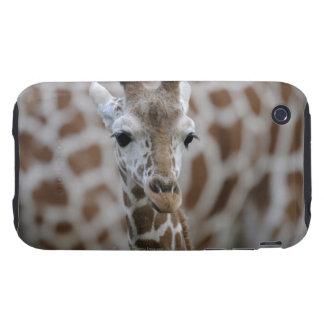 Netzgiraffe, reticulata de los camelopardalis del tough iPhone 3 protectores