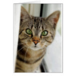 neugierige Katze Karten
