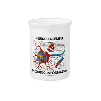 Neural Ensemble Encoding Information Neuron Beverage Pitcher