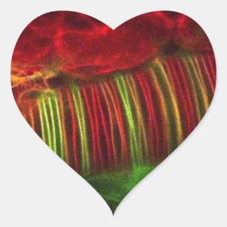 Neural tube heart sticker